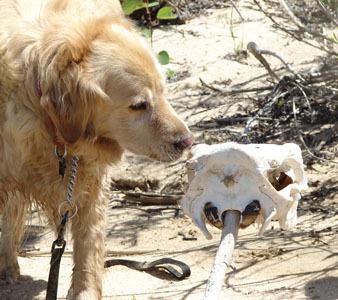 dog with skull #1
