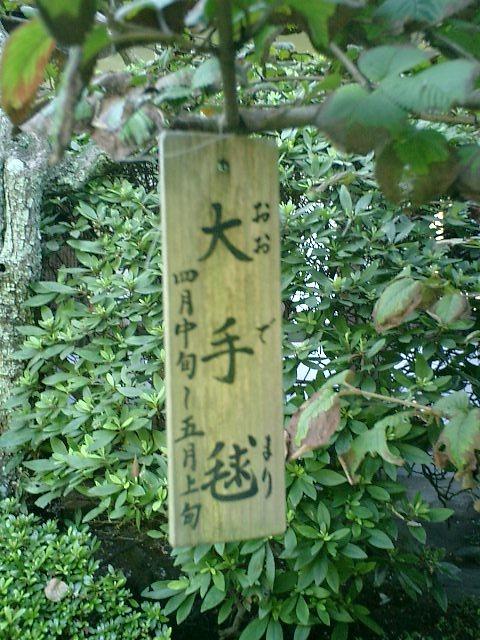 4-05)鎌倉市長谷「長谷寺」大手毬.JPG